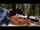 ЗИМНЯЯ НАЖИВКА ДЛЯ РЫБАЛКИ В ЛЕСУ. Эта наживка зимой в тайге есть всегда и ее мно...