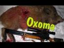Охота с пневматикой на кабана BOAR HUNTING