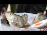 Чемпионат по рыбалке на спиннинг в Борисоглебске