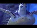 Суперхищник Черная рифовая акула Морской риф