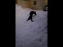 фрося и снег.