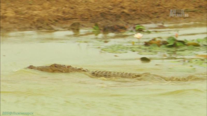 «Неизведанные острова (04). Шри-Ланка. Остров муссонов» (Документальный, животные, 2012)