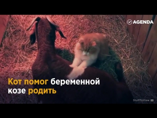 ЗАБОТЛИВЫЙ КОТИК-ОКУШЕР