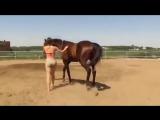 Смышленая лошадь