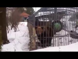 ОНА ТЕБЯ СОЖРЕТ НЕ ЛЕЗЬ ДЕБИЛ (Remix)