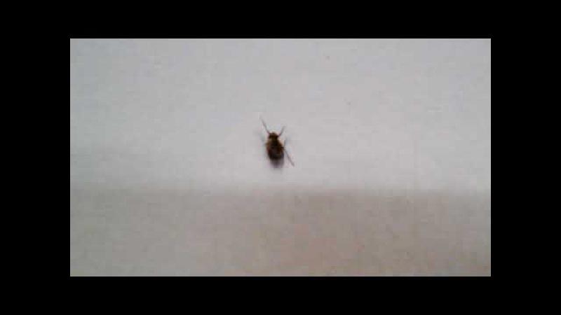 Муха в істериці. Істерика мухи в супермаркеті