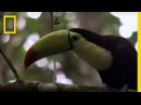 Birds of Paradise - Toucan