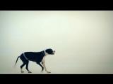 Пающие Трусы - Василёк (Осторожно! Нецензурная версия)
