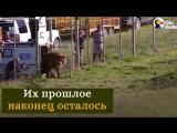Эмоции животных, которые вышли на свободу из цирка.