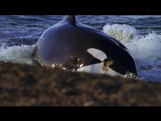 Дельфины — Шпион в стае. Серия 2 из 2 (2014)
