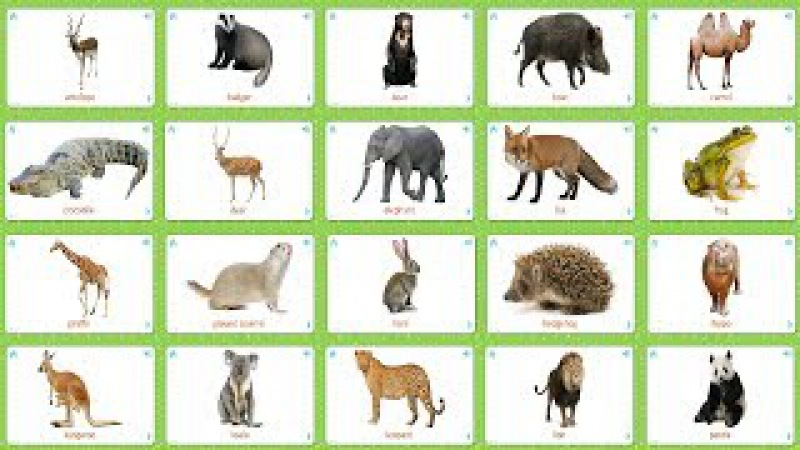 Wild Animals (33 Cards) Flashcards for Kids - Collection