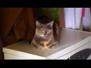 Hypnotist cat