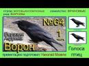 Ворон Евразия Африка Голоса птиц