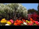 Джеймс Ласт Жизнь прекрасна James Last Life is beautiful Парк Асикага