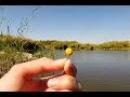 Как приготовить горох для рыбалки Карпа и насадить на крючок