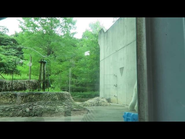 9 July 2017 Pororo at Tokushima zoo, Tokushima, Japan