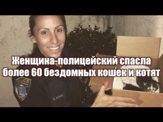 Женщина-полицейский спасла более 60 бездомных кошек и котят
