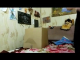 Костос и коробка
