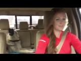 Когда твоя собака знает толк в музыке (приколы топ юмор)