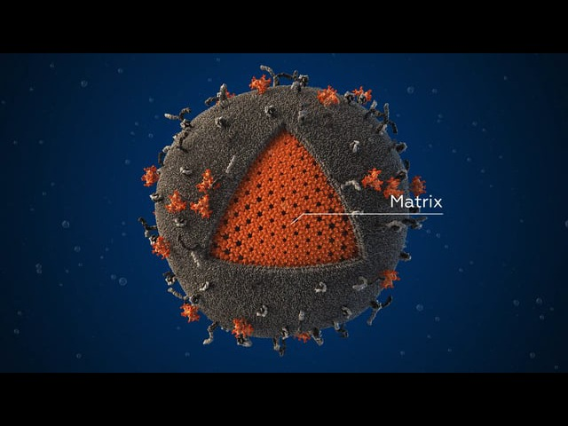 Scientifically accurate 3D-model of the human immunodeficiency virus (HIV) particle