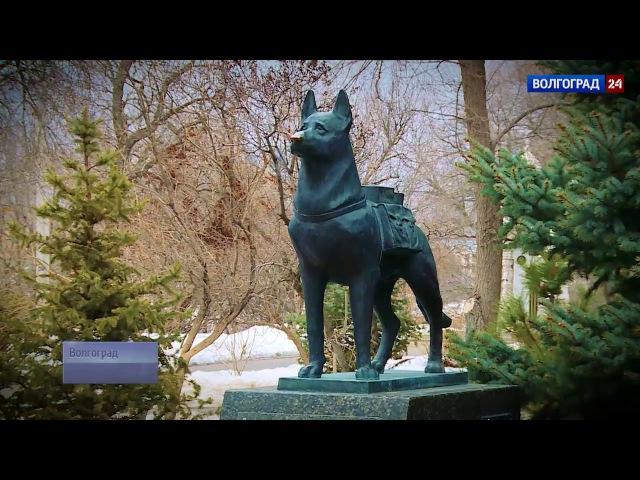Городские истории. Памятник собакам подрывникам, истребителям танков