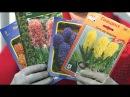 Удачная среда - выгонка луковичных цветов в домашних условиях (Бийское телевид ...