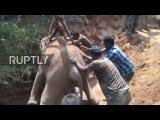 Индия Слоненок, спасенный со дна 21-метровой скважины.
