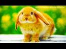 Фиксики кролик или зайчик Отдых в Китае. When its Monday morning and you wonder... туры в китай