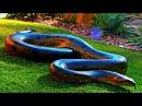 Самая большая в мире змея - Анаконда. Загадочное существо. Документальный фильм HD