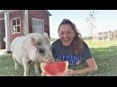 ЗАСМЕЯЛСЯ ПРОИГРАЛ СМЕШНОЕ видео про ЖИВОТНЫХ Приколы с животными Октябрь 2017