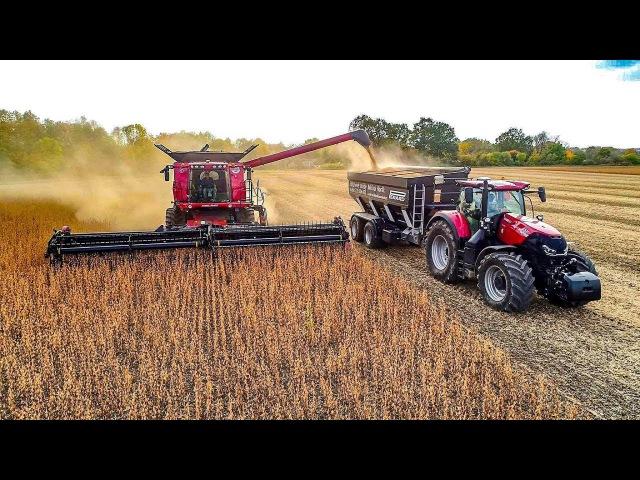PERARD Interbenne 25 Black Red Sklizeň sóji, Soybean harvest 2017