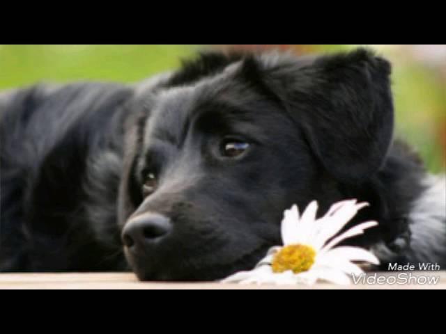 Песня пропала собака по кличке дружок