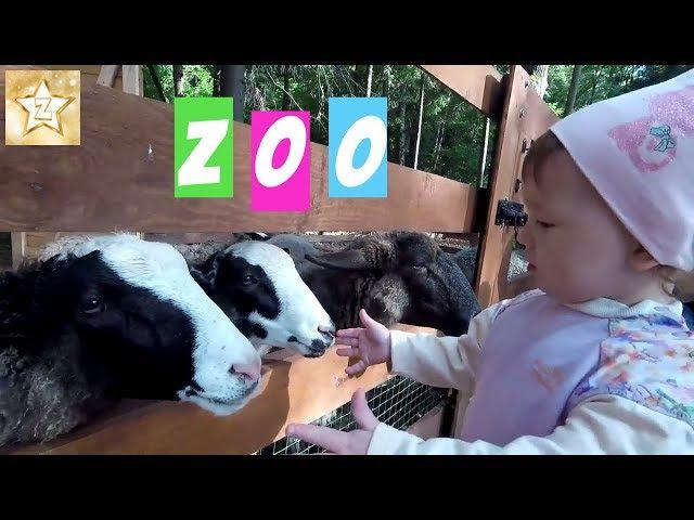 КОНТАКТНЫЙ ЗООПАРК ВО ВНУКОВО АУТЛЕТ ВИЛАДЖ | OUTLET VILLAGE VNUKOVO petting zoo