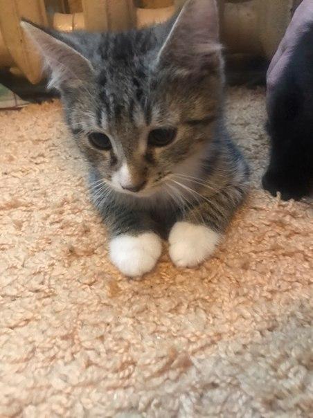 Отдадим двух котят(4 месяца) в хорошие руки.