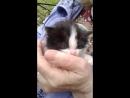 Котенок срочно ищет дом
