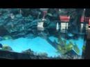 Аквариум в трц океан плаза