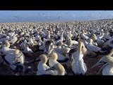 BBC. Великие природные явления. 4 Серия: Великий Поток / The Great Tide (2009)