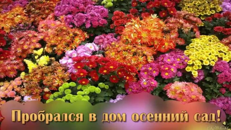 Осенние цветы - источник радости и красоты