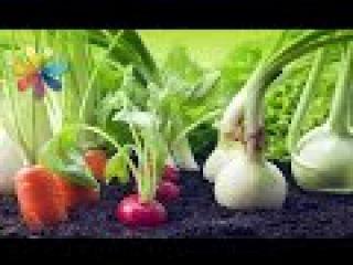 Как выращивать овощи дома, чтобы целую зиму был урожай – Все буде добре. Выпуск 90...