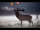 Марина Кравец - Лесной олень /Вернись лесной олень /Видео подборка