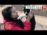 Спасение #49.  Кот ждал помощи два дня.  Город Улан-Удэ.