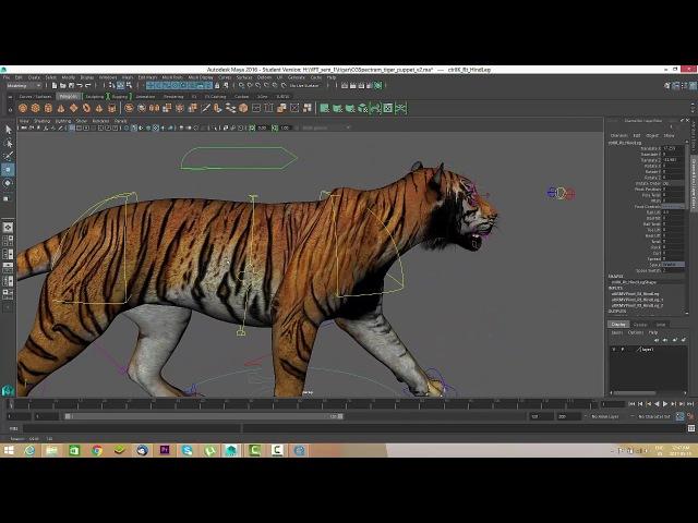 Tiger Walkcycle Tutorial - Maya- Nav Tutorials