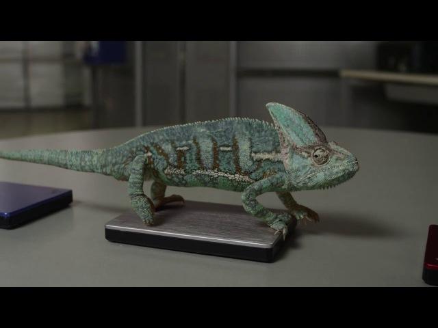 Забавный хамелеон меняет цвет видео прикол