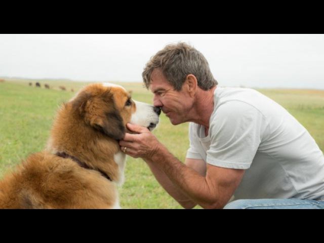Собачья жизнь, 2017 — трейлер — КиноПоиск » Freewka.com - Смотреть онлайн в хорощем качестве
