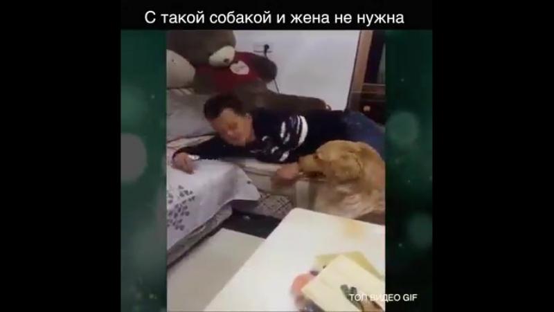 Хорошая собачка и жена не нужна