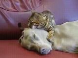 Слушай только мой голос... Ты любишь кошек... Ты никогда не будешь гонять больше кошек... Кошки - твои друзья...
