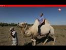 «НЕФАКТ» Золотые кони хана Батыя