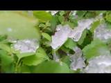 Снег и черёмуха 8 мая 2017