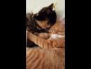Бася целует Юджина