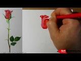 Рисуем розу цветными карандашами